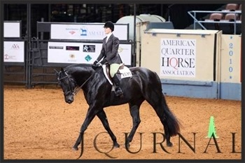 show horse and rider in arena