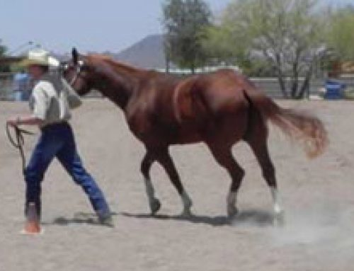 CORRECTLY SHOWING YOUR HORSE AT HALTER — HELPFUL TIPS AND INSIGHTS