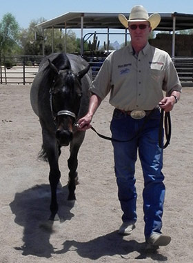 showing a horse at halter
