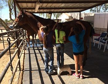 little girls brushing horse