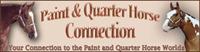 paint & quarterhorse connection